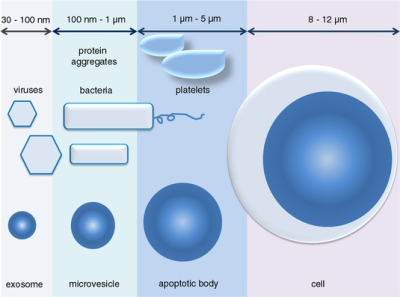 Different subsets of extracellular vesicles